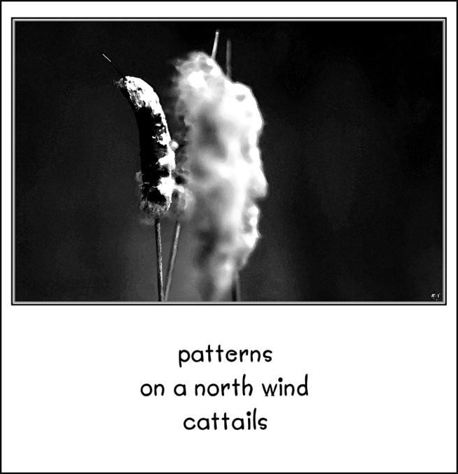 cattailBW