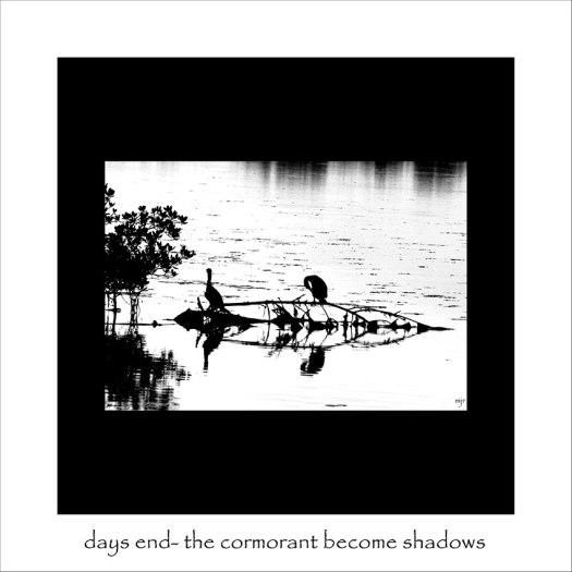 becomingshadows