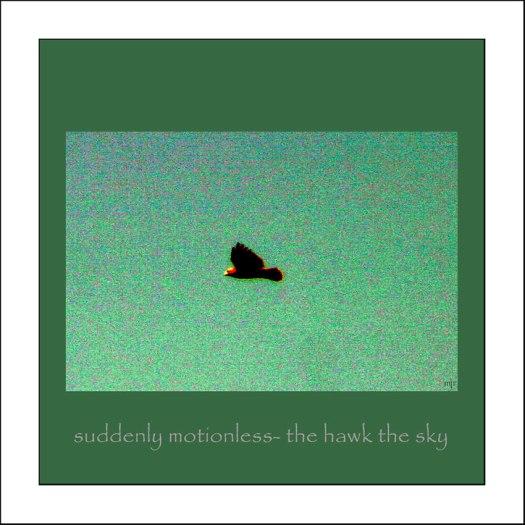 motionlesshawk