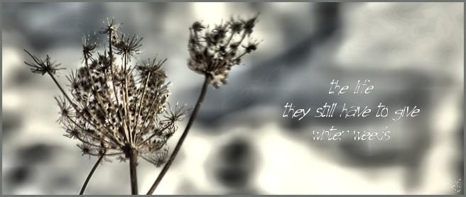 winterweedshaiga