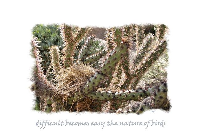 cactusnesthaiga