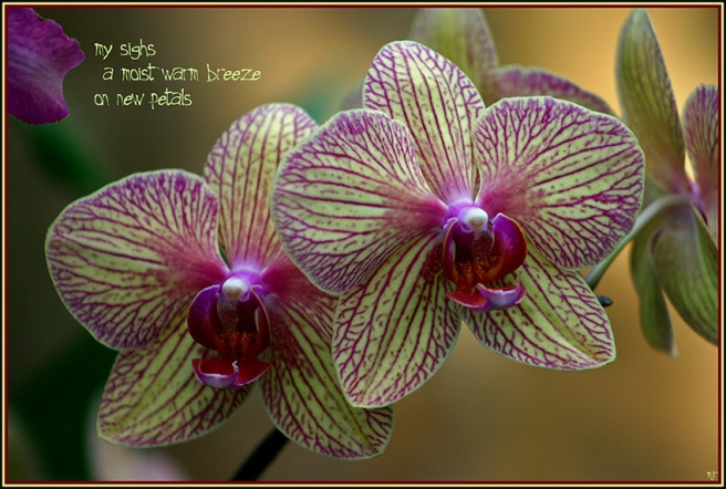 orchids (2018_05_07 17_24_09 utc)