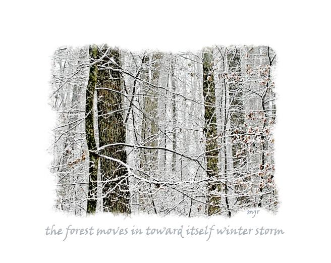 winterstormhaiga