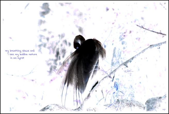 egret3 (2018_05_07 17_24_09 UTC)