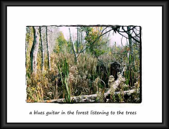 bluesguitarhaiga (2017_10_29 18_53_40 UTC)